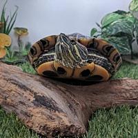 Adopt A Pet :: Sally - Pefferlaw, ON