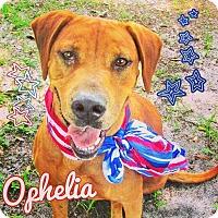 Adopt A Pet :: OPHELIA - Grand Island, FL
