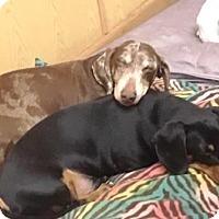 Adopt A Pet :: Chip & Charlie - Gilbert, AZ