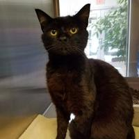 Adopt A Pet :: Cinders - Chambersburg, PA