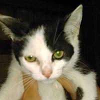 Adopt A Pet :: Gizmo - Norwich, NY