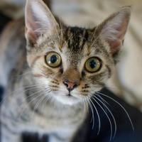 Adopt A Pet :: O - Greenwood, SC