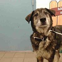 Adopt A Pet :: BUDDY - Albuquerque, NM