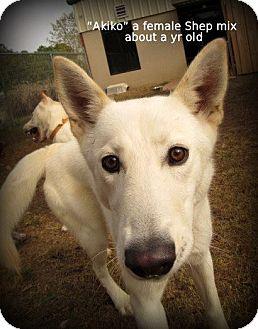 Shepherd (Unknown Type) Mix Dog for adoption in Gadsden, Alabama - Akiko