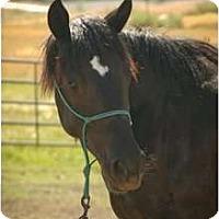 Adopt A Pet :: Tar Baby ( Tara) - Durango, CO