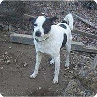 Adopt A Pet :: Mr Man - Plainfield, CT