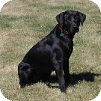 Adopt A Pet :: Tripp - Lewisville, IN