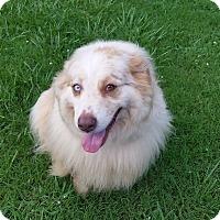 Adopt A Pet :: Sam - Palestine, TX