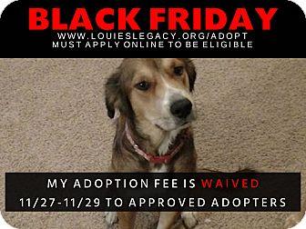 Golden Retriever/German Shepherd Dog Mix Dog for adoption in Cincinnati, Ohio - Lilly WAIVED FEE/BLACK FRIDAY