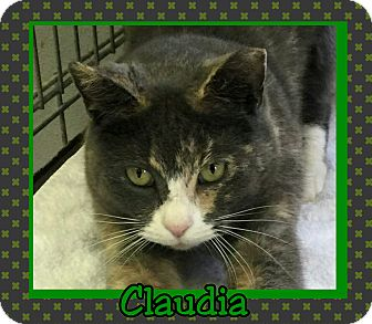 Calico Cat for adoption in Atco, New Jersey - Claudia