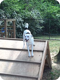 Chihuahua/Terrier (Unknown Type, Small) Mix Dog for adoption in Cincinnati, Ohio - Lily