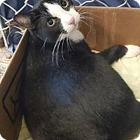 Adopt A Pet :: Bugsy - Freeport, NY