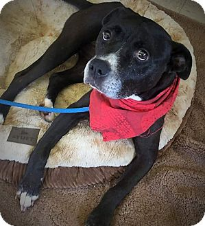 Terrier (Unknown Type, Medium) Mix Dog for adoption in Flint, Michigan - Carrie - Adopted