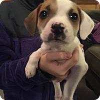 Adopt A Pet :: Carrie - Marlton, NJ