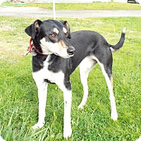 Adopt A Pet :: Blossom - Grants Pass, OR