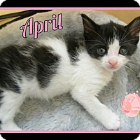 Adopt A Pet :: April - Orlando, FL