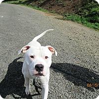 Adopt A Pet :: Moonshine - Tillamook, OR