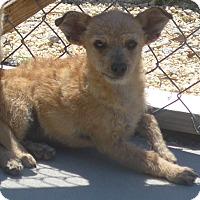 Adopt A Pet :: Scruffy - Manning, SC