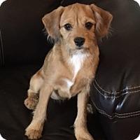 Adopt A Pet :: Bethany - Garland, TX