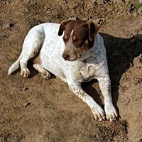 Adopt A Pet :: Louise - Quinlan, TX