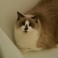 Adopt A Pet :: Sam - Ortonville, MI