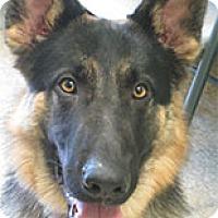 Adopt A Pet :: Boomer - Warren, PA