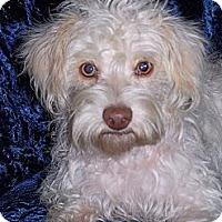 Adopt A Pet :: Montana - San Angelo, TX