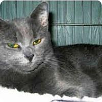 Adopt A Pet :: Macy - Medway, MA