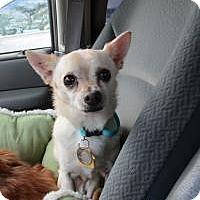Adopt A Pet :: Star - Shawnee Mission, KS