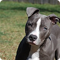Adopt A Pet :: Moonpie - Dayton, OH
