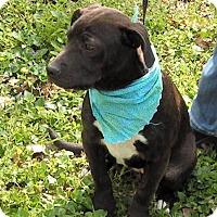 Adopt A Pet :: Grace - Normandy, TN