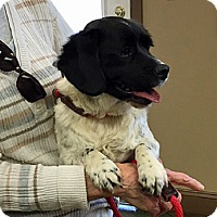 Adopt A Pet :: DASH - Pine Grove, PA