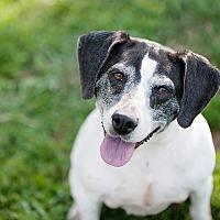 Adopt A Pet :: Misha - Unionville, PA