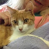 Adopt A Pet :: Sherbert - Picayune, MS