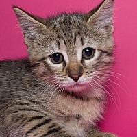 Adopt A Pet :: Daisy - Jersey City, NJ