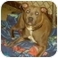 Photo 1 - Pit Bull Terrier Dog for adoption in Yorkville, Tennessee - Skye