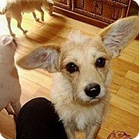 Adopt A Pet :: Spankie - Hollywood, FL