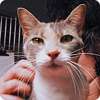 Adopt A Pet :: Ramona - Lunenburg, MA