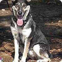 Adopt A Pet :: Sarah - Altadena, CA