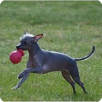 Adopt A Pet :: Mr. Reese ***ON HOLD*** - Toronto/Etobicoke/GTA, ON