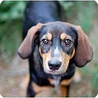 Adopt A Pet :: Jackpot - Dallas, TX