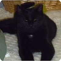 Adopt A Pet :: Reverend - Hamburg, NY