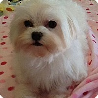 Adopt A Pet :: Promise - Orange, CA
