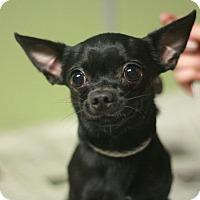Adopt A Pet :: Blackjack - Canoga Park, CA