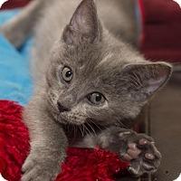 Adopt A Pet :: IvyM - North Highlands, CA