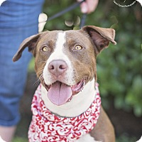 Adopt A Pet :: Rosie - Kingwood, TX