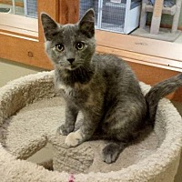 Adopt A Pet :: Faith - Diamondville, WY