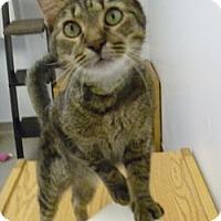 Adopt A Pet :: Corky - Hamburg, NY
