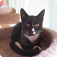 Adopt A Pet :: Pia - Colonial Beach, VA