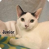 Adopt A Pet :: Junior - Foothill Ranch, CA